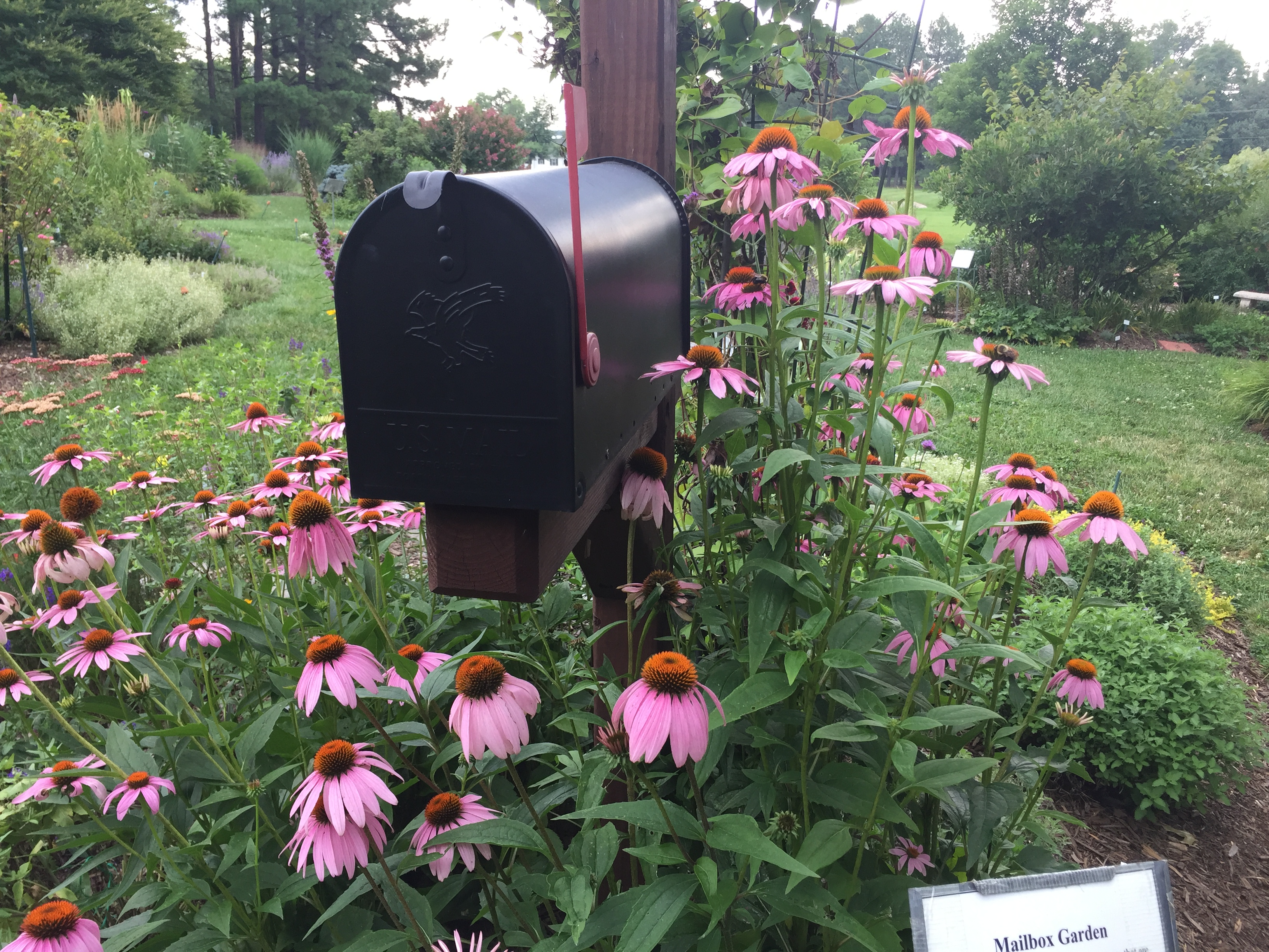 Lynne Lanier Is The Bedleader Of The Mailbox Garden. She Is Our Blogger For  This Week. Thanks Lynne! Its A Beautiful Garden.