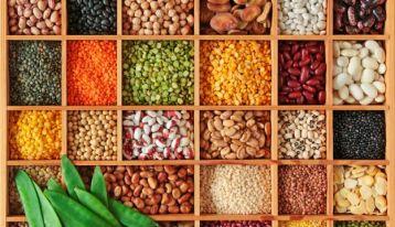 Variety of legume seeds
