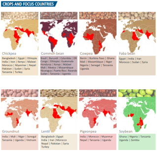 Global Legume Production by crop