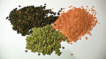 First cultivated legumes, lentils