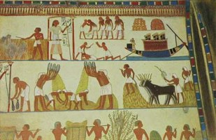 Early Egyptian agriculture