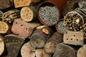 nesting sites for mason bees