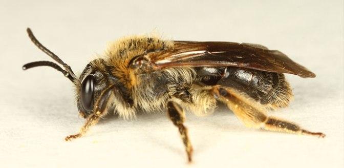 mining bee2