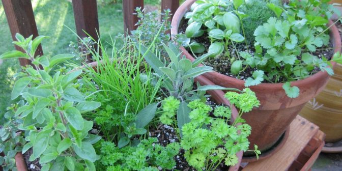growing-herbs-for-bbq-and-grill-meals-1280x640
