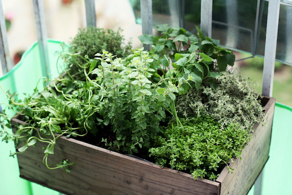growing-herbs-on-outdoor-balcony