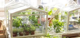 herbgrowing