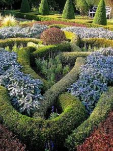 knot garden using herbs