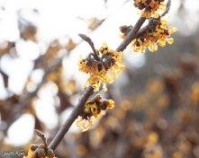 justkim-2019-mgpw-teachinggarden-pruningclass-1