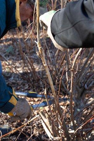 justkim-2019-mgpw-teachinggarden-pruningclass-12
