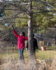 justkim-2019-mgpw-teachinggarden-pruningclass-13