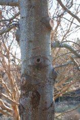 justkim-2019-mgpw-teachinggarden-pruningclass-16