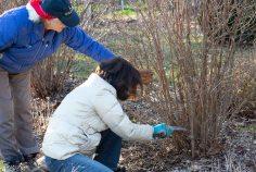 justkim-2019-mgpw-teachinggarden-pruningclass-19