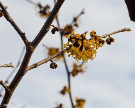 justkim-2019-mgpw-teachinggarden-pruningclass-3