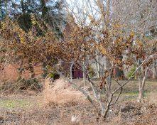 justkim-2019-mgpw-teachinggarden-pruningclass-4