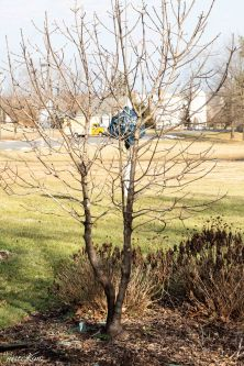 justkim-2019-mgpw-teachinggarden-pruningclass-6