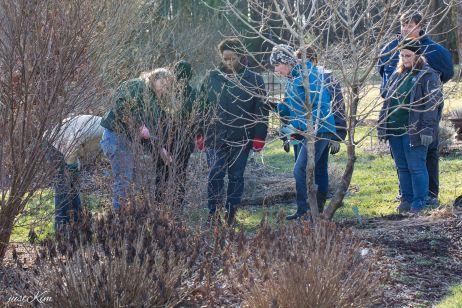 justkim-2019-mgpw-teachinggarden-pruningclass-9